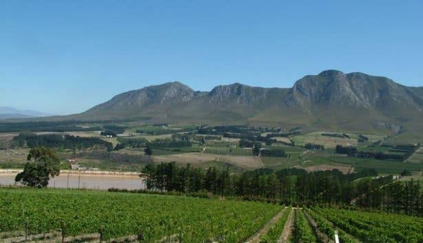 Hermanus vineyards