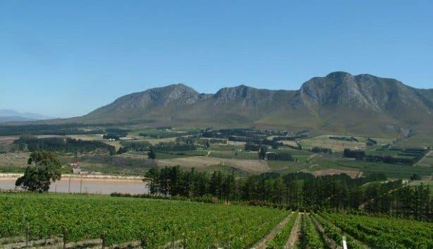 Hermanus vineyards