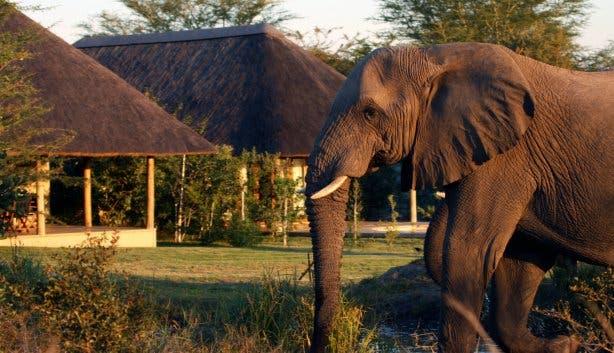 krugerpark safari zuidafrika