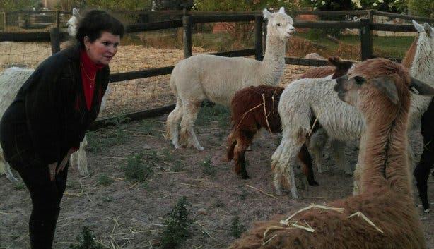Akelei Alpakas SA, Eva Dölitzsch-Tatzreither, Alpakafarm, Alpakas Südafrika