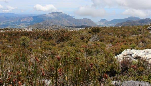 Fynbos und Mountain
