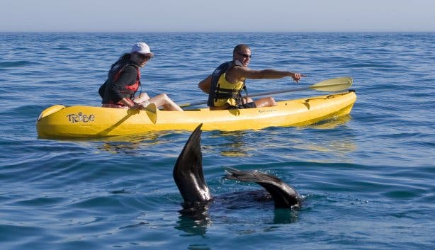 kayakken in Hermanus