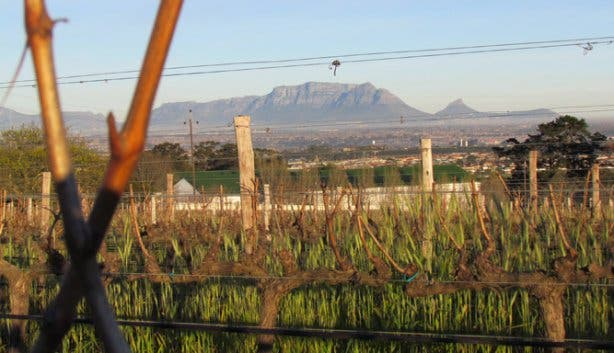 View from Saxenburg Wine Estate Stellenbosch