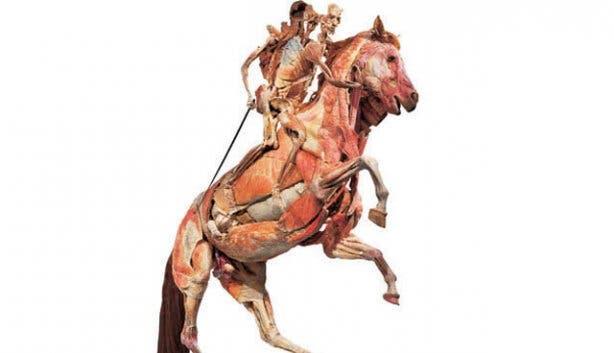 body worlds horse