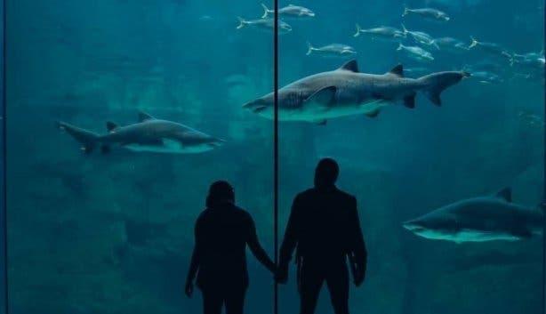 Two Oceans Aquarium Birthday Free3