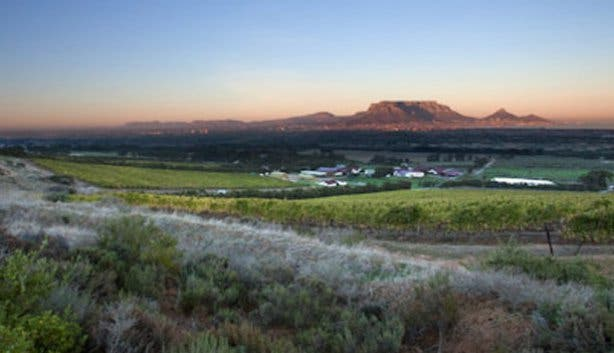 De Grendel Wine Farm View