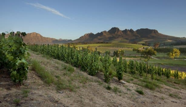 Stellenbosch Winelands from Peter Falke