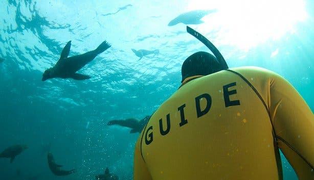 seal snorkeling guide 2