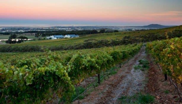 De Grendel Wine Farm Vineyards