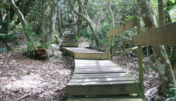 Spes Bona Forest 7