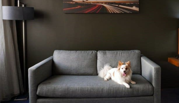 Park Inn_Pet Friendly Rooms