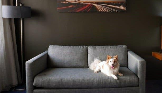 Park Inn_Pet Friendly Rooms