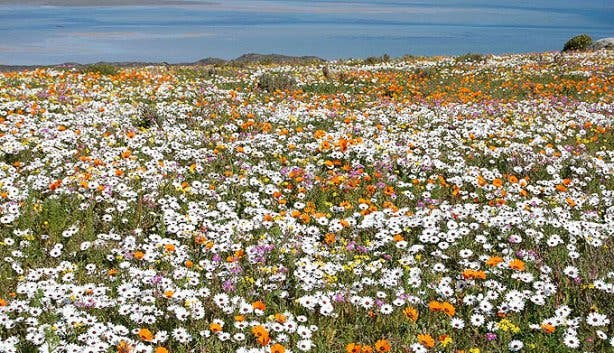 Flower Season Carmen Gagiano 1