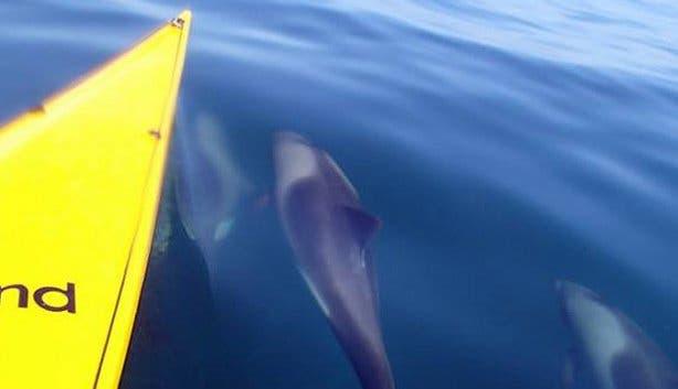 sea kayaking dolphins