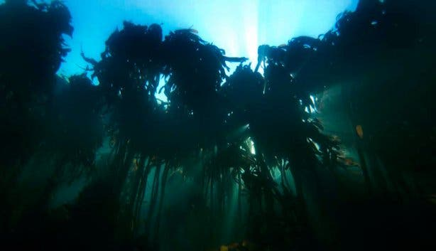 Into The Blue Kelp Forest 3
