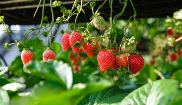 Redberry Farm 3