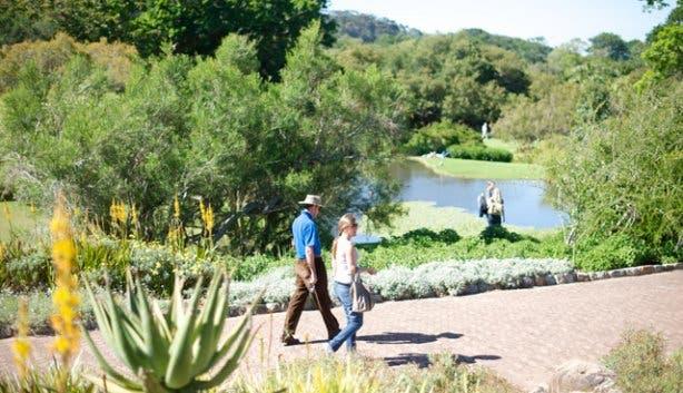 Kirstenbosch Hi Tec 10