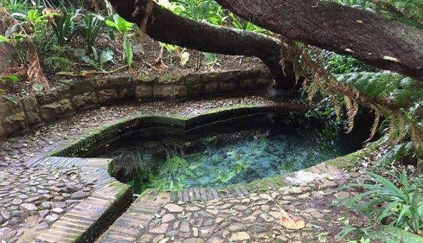 Kirstenbosch - 3
