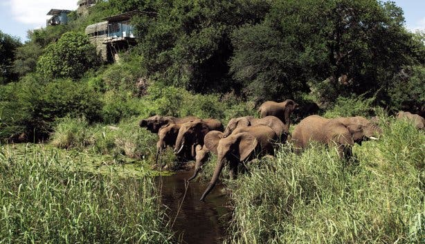 Luxe safari Zuid-Afrika