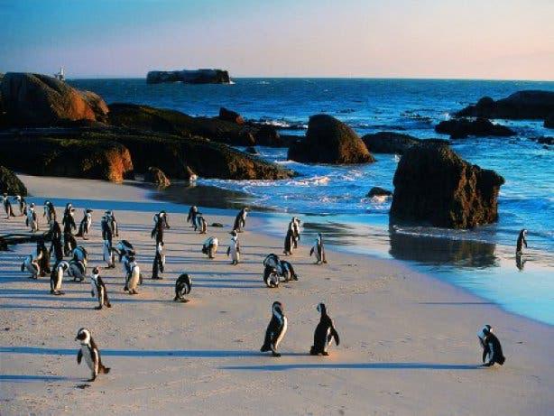 Boulders Beach Pinguine Sonnenuntergang