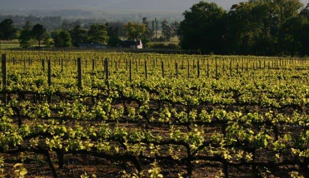 Boschendal Wine Farm Franschhoek Vineyards