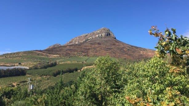 Stellenbosch Balzer
