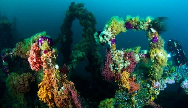 Into The Blue Reef 2