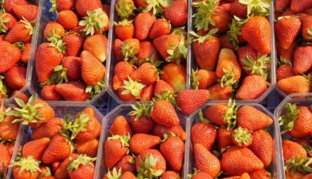 Redberry Farm 1
