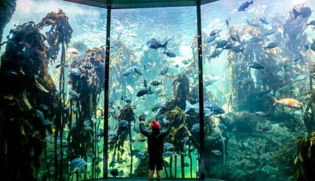 Two Ocean's Aquarium