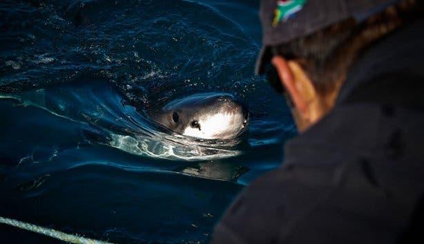 WSDC Shark 2