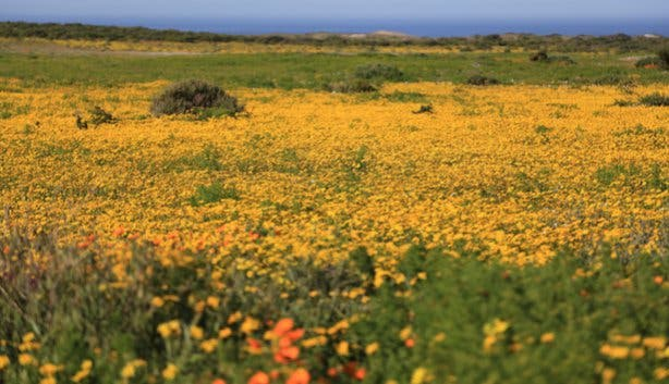 SANParks West Coast National Park at Flower Season