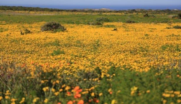 SANParks West Coast National Park at Flower Season