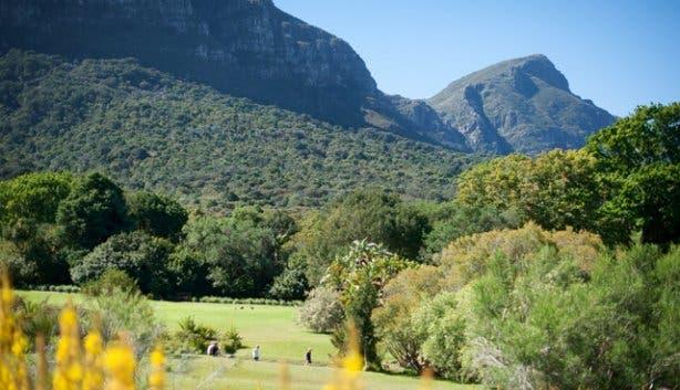 Kirstenbosch Hi Tec 11