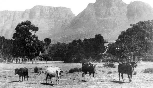 Rondebosch Common by HiltonT@Flickr