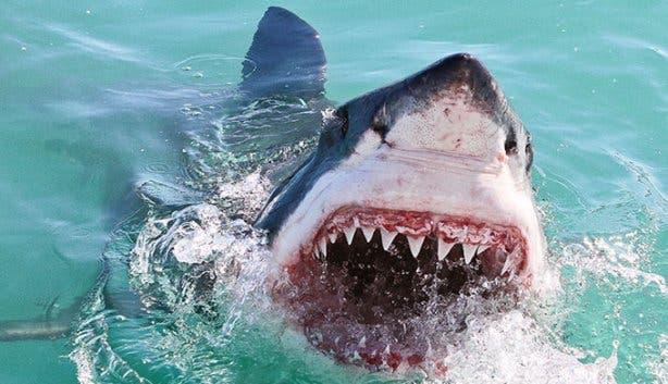 WSDC Shark Jumping 5