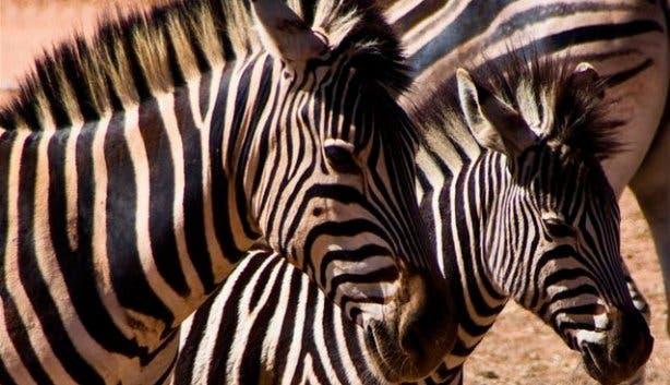 Zebra Aquila Game Reserve