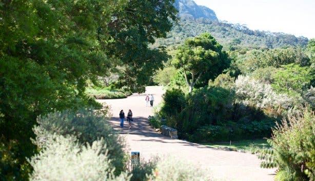Kirstenbosch Hi Tec 12