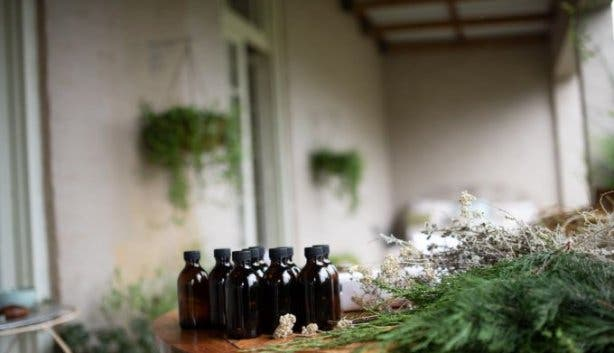 wild_herbalism_workshop_