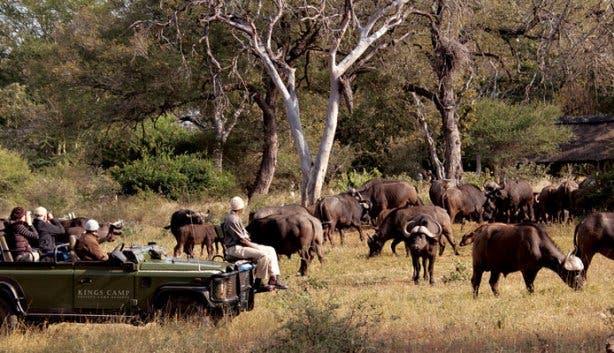 Timbavati safari zuid afrika