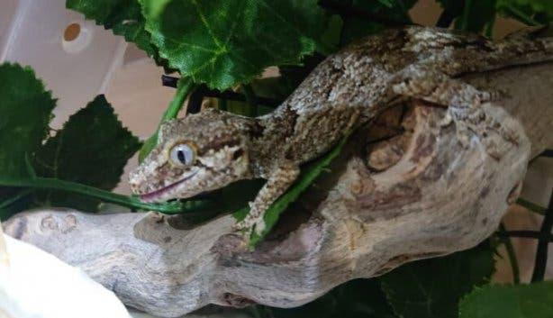 reptile_expo
