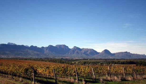 Spier Wine Farm in Stellenbosch