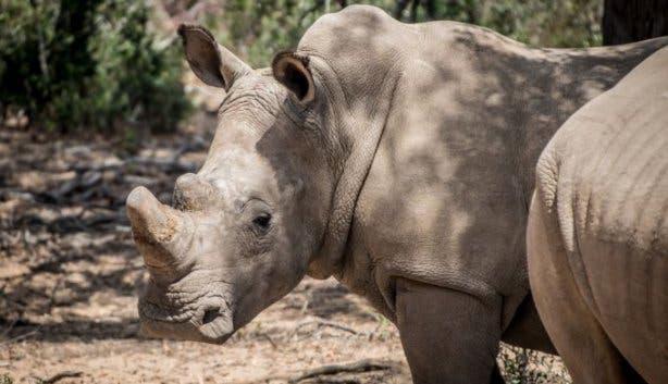 Buffelsfontein