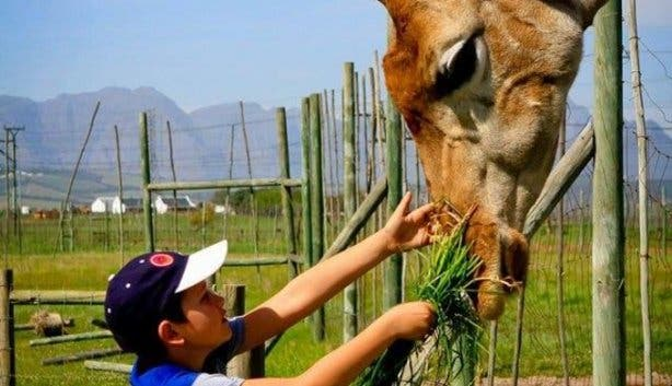free_kids_giraffe_house