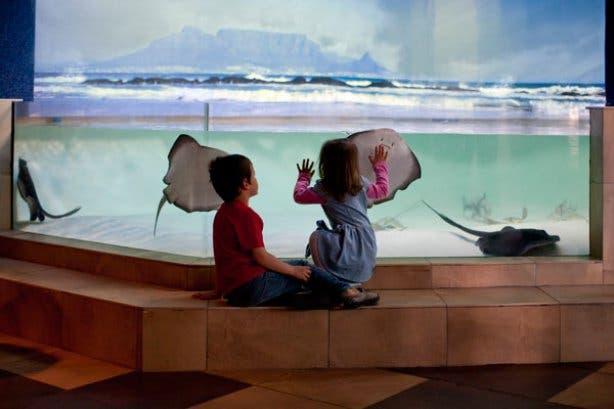 2 oceans aquarium image t