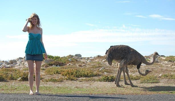 Maxime and the ostrich