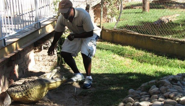 Crocodile Farm2