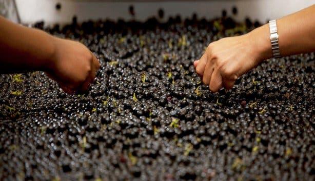 Glenelly Wine Estate 21