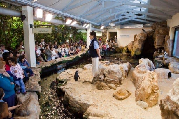 penguin show- two oceans aquarium