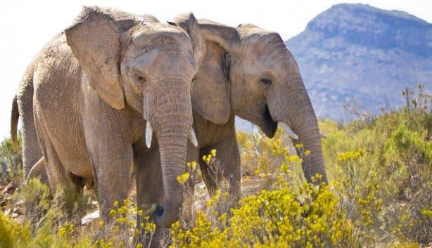 Elephants at Aquila