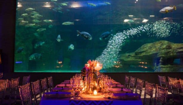 two_oceans_aquarium